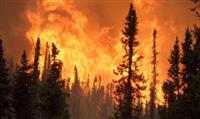 Prévenir l'incendie dans les massifs forestiers grâce à une application